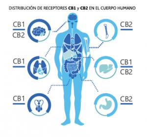 distribu_cb1cb2